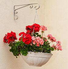 Willkommen-Blumen